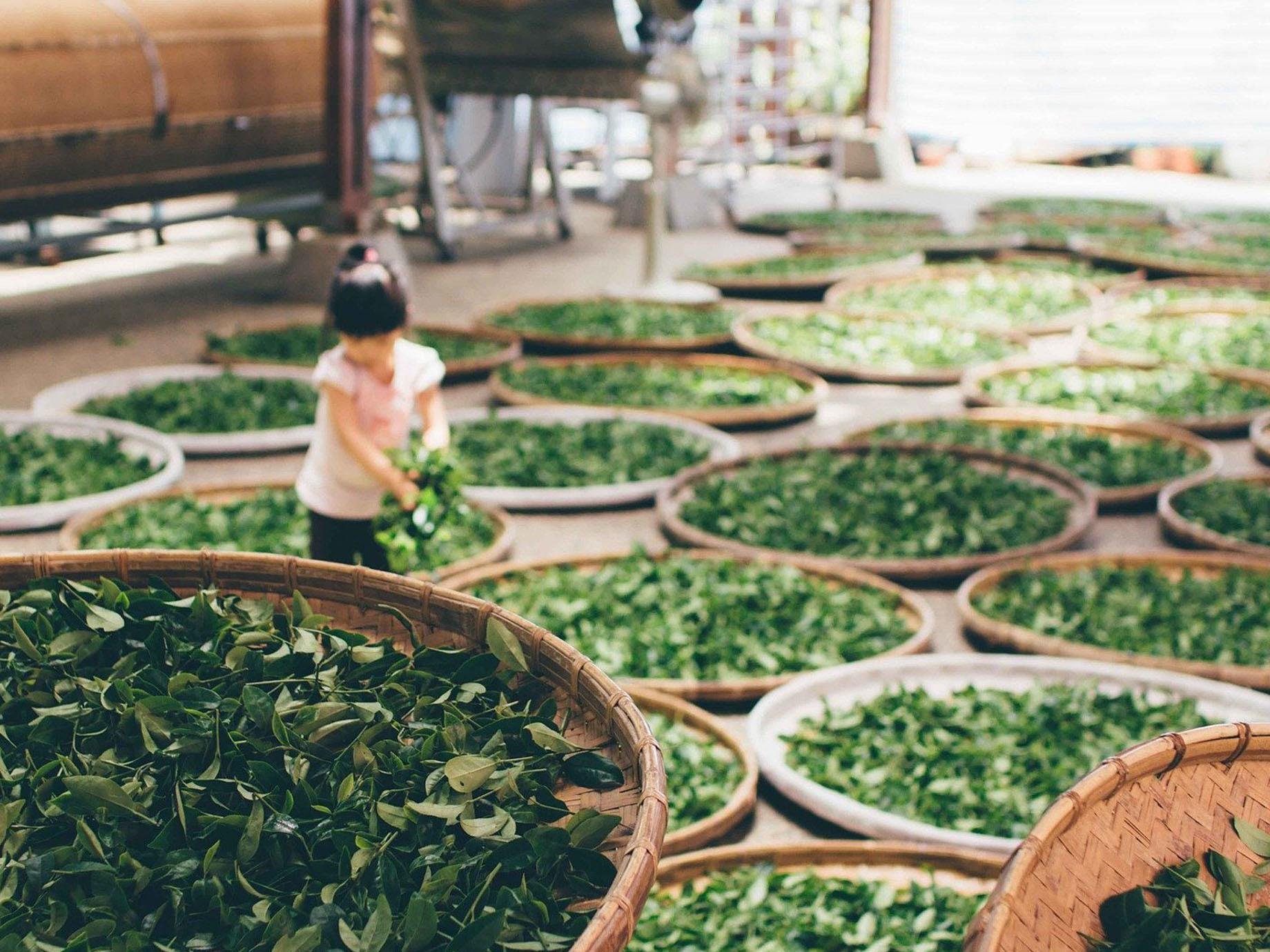 行銷人員該多喝美人茶!從職業找出最適合你的「飲茶性格」