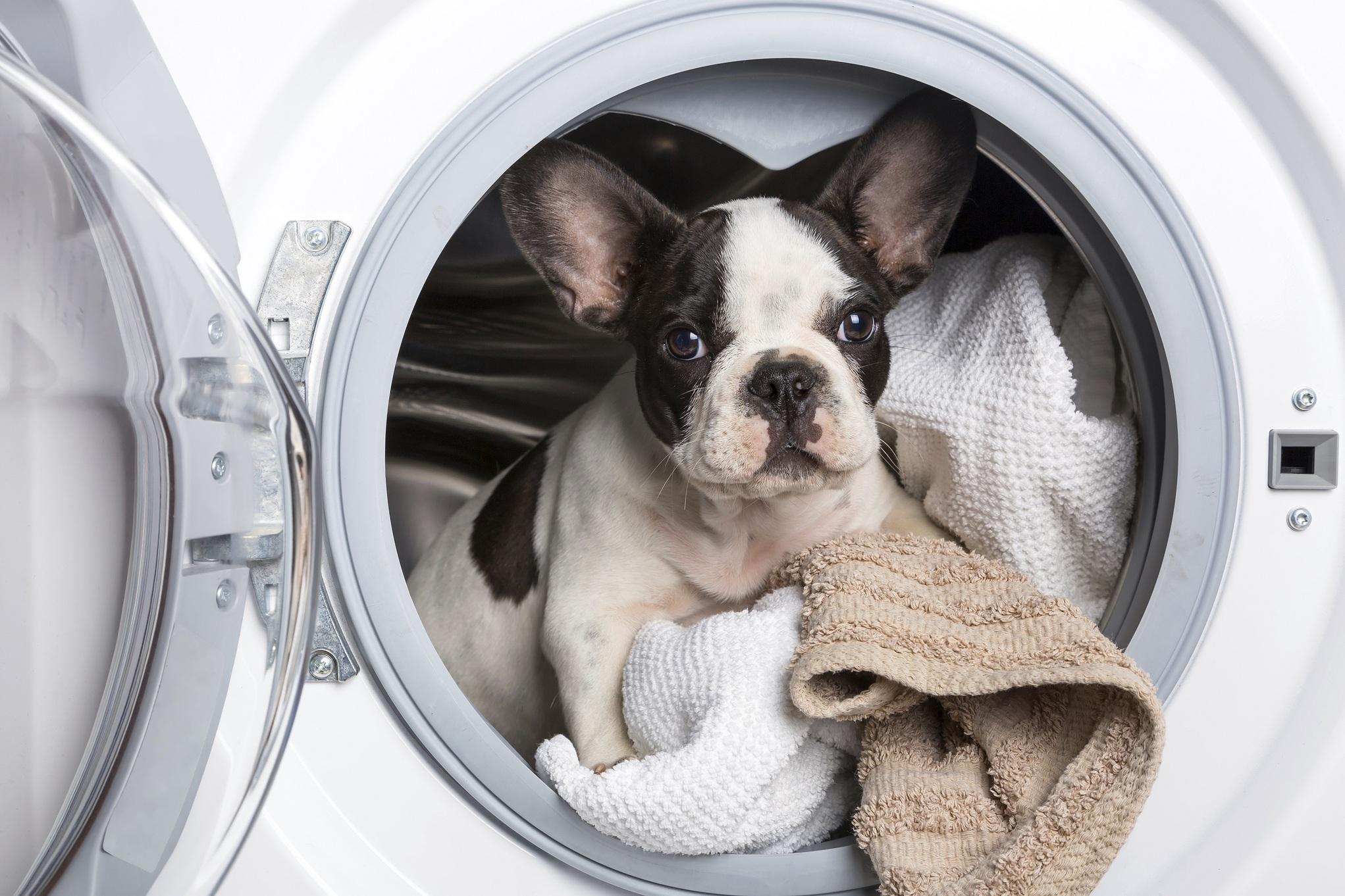 〈2015年9月〉台灣網路消費者對「洗衣機」購買行為與通路品牌分析-EAGLEEYE鷹眼數據