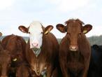 掌握「紫牛行銷」3訣竅,讓你的產品在市場上一枝獨秀